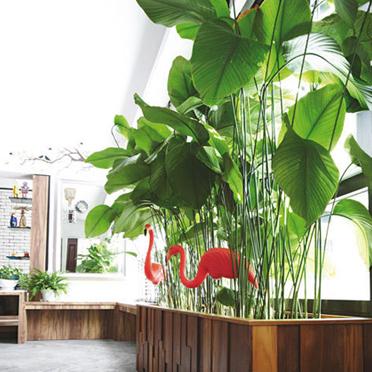 Majestic Planters @ eCO