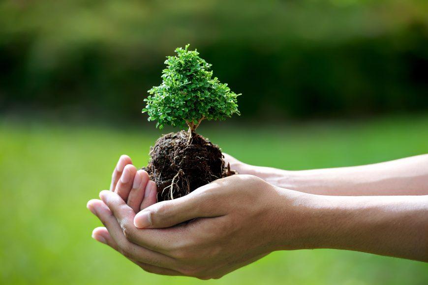The Right Bonsai Tree Care